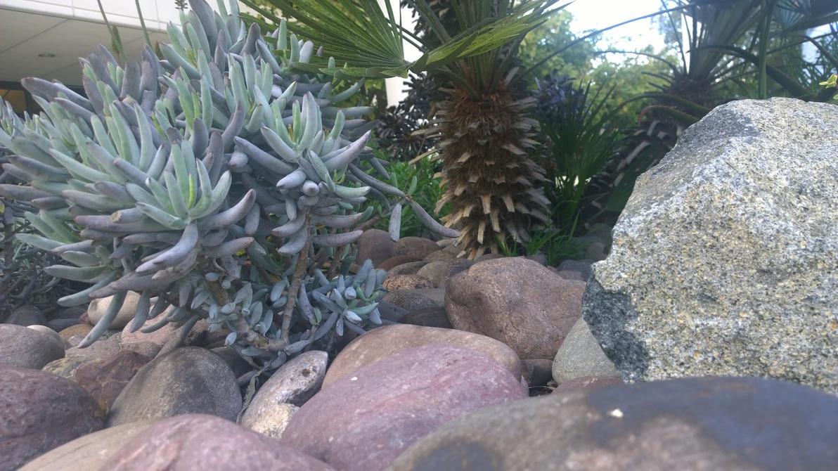plants  and rocks 4 by kilik09
