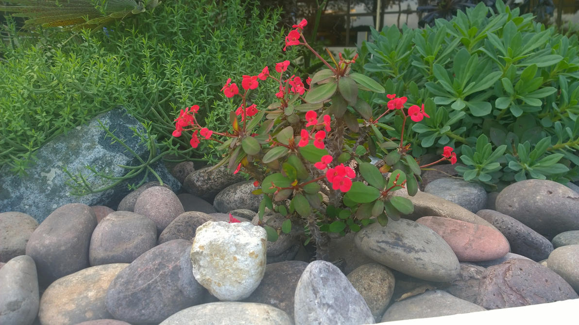 plants  and rocks by kilik09