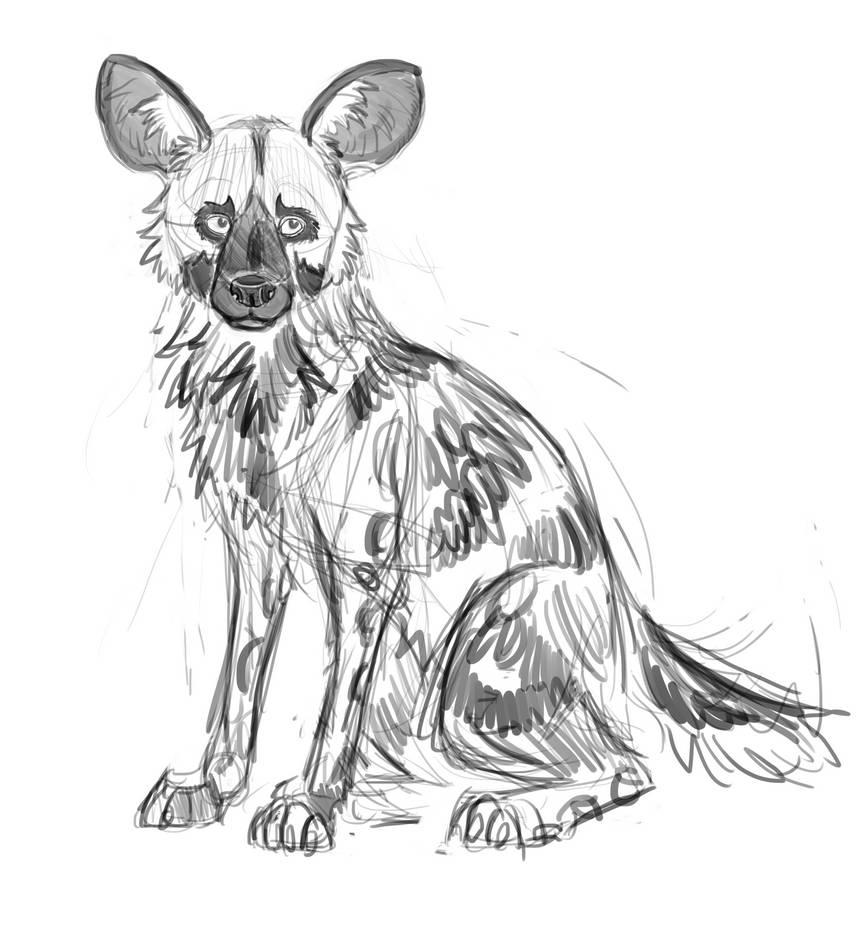 African wild dog sketch by euradym