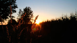 dusk by c0nk3r
