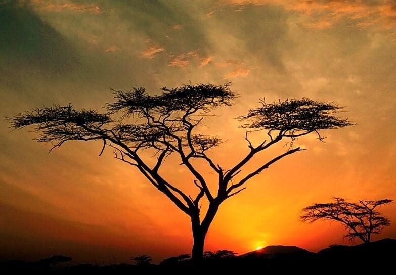 tree by judy-y