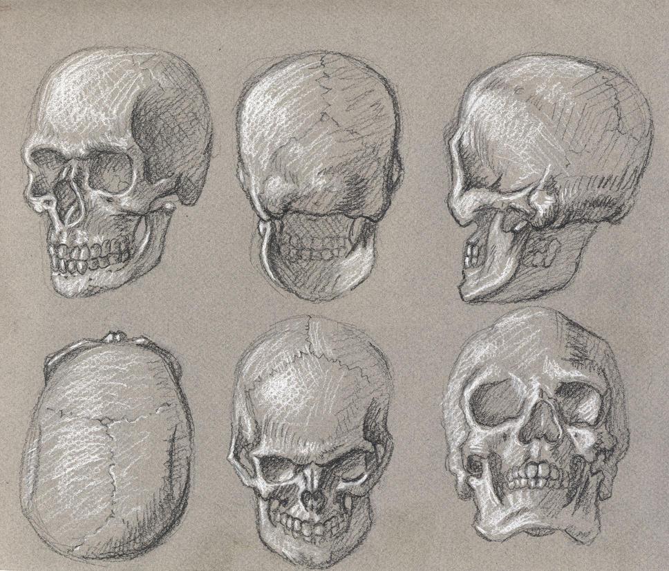 Real skull angles