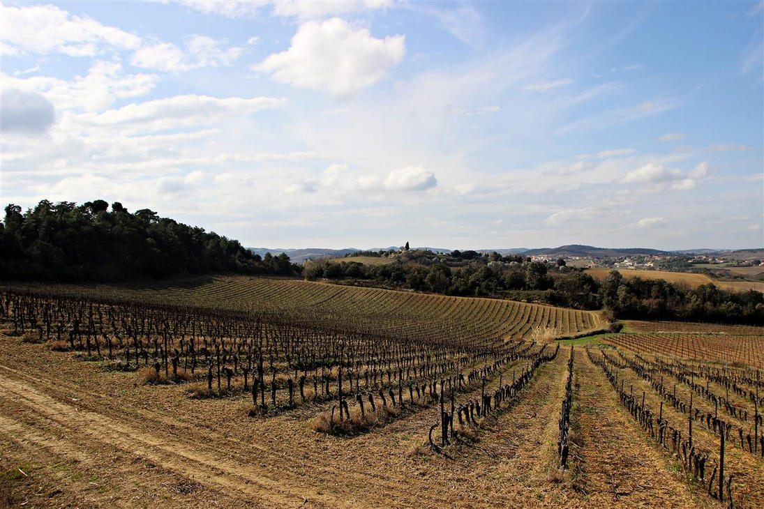 Vignobles de Limoux by Gerfer