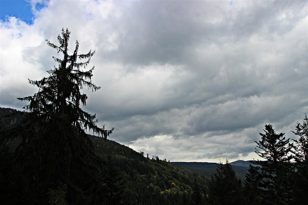 Sky is covered on the Alsatian forest by Gerfer