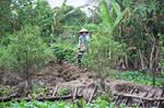 Mekong's gardener by Gerfer