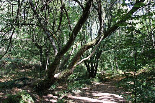 Forest of Broceliande 1