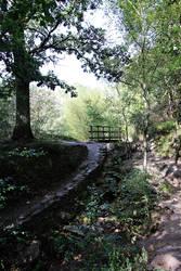 Forest of Broceliande 2