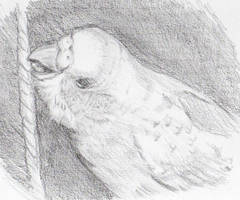 budgie by budgielicious