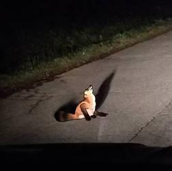 Day 18 : fox