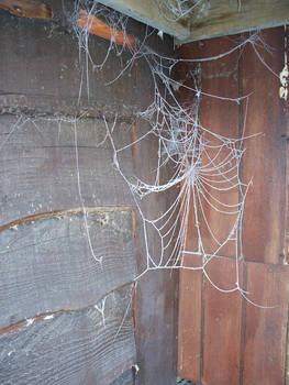 ice web 3