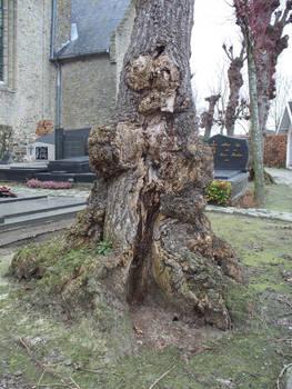 graveyard Werken strange roots