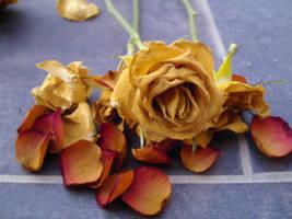 red death rozes 4