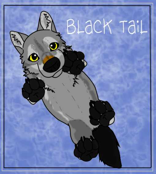 BlackTailwolf's Profile Picture
