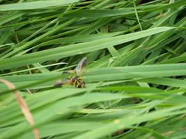 Buzzbee the Wasp by DarkWaltzFairy