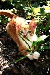 Teh Kitty by ViRPo
