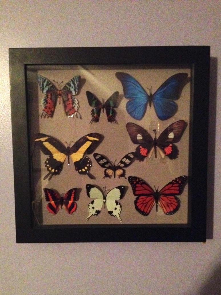 Faux Butterfly Display by jofflin