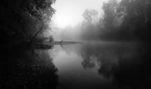 Foggy Serenity