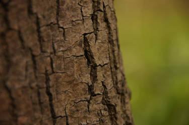 focus on bark by iFoXx360