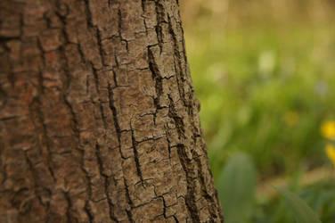 focus on bark 2 by iFoXx360