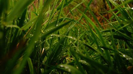 Rain Drops II by iFoXx360