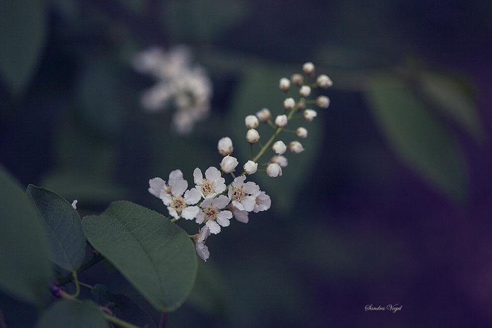 Spring by DerDunkleEngel