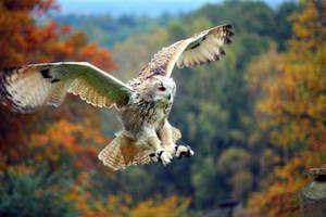 eagle owl by Amaretto125