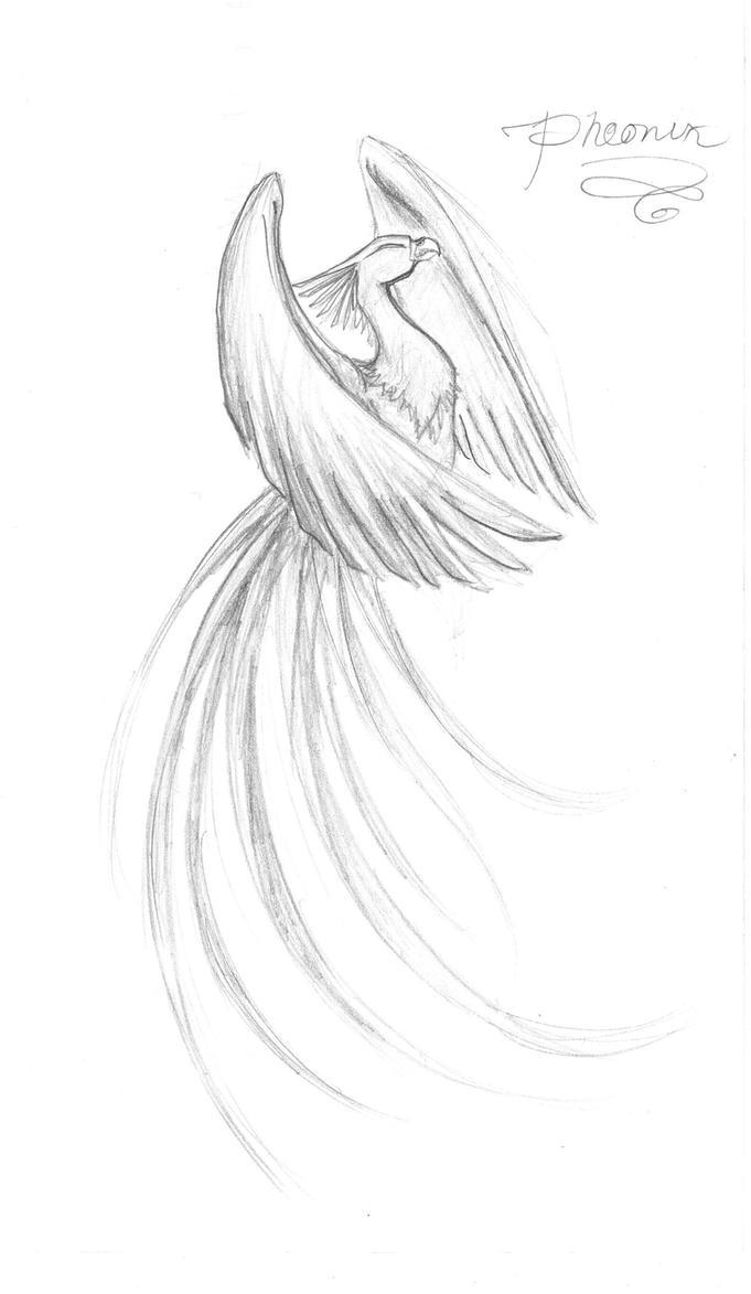 Phoenix by Kamiruchan015
