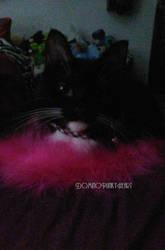 ~Pink Fluffs~