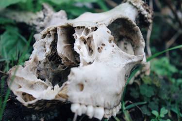 brittle bones