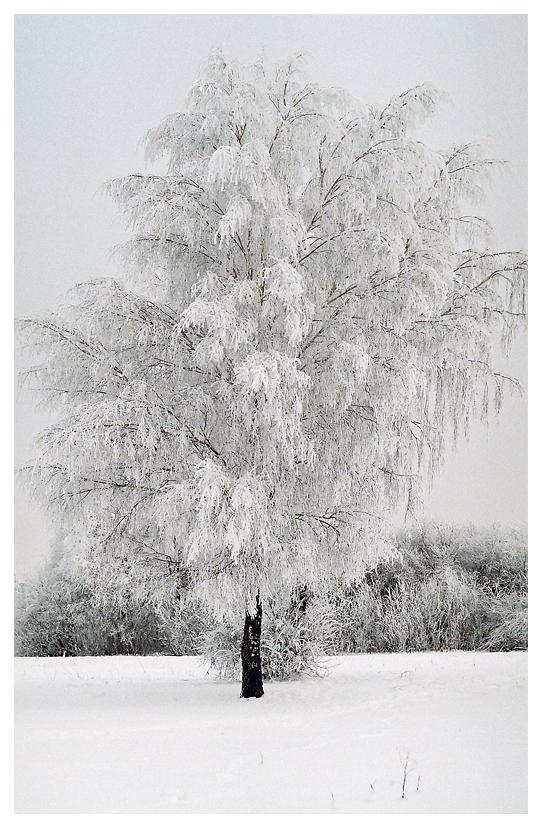 Winter II by aare