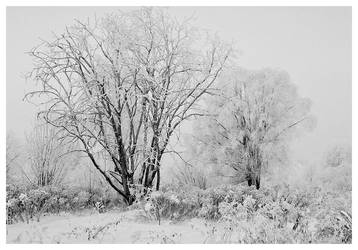 Winter III by aare