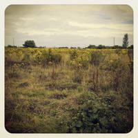 Greener Pastures I