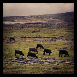 Greener Pastures IV