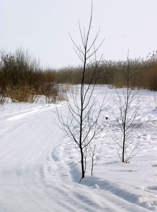 Pathway to Lake