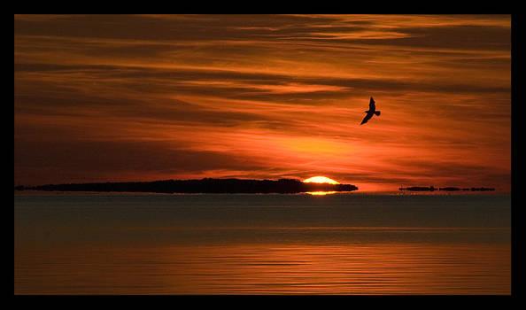 Bird and Sundown