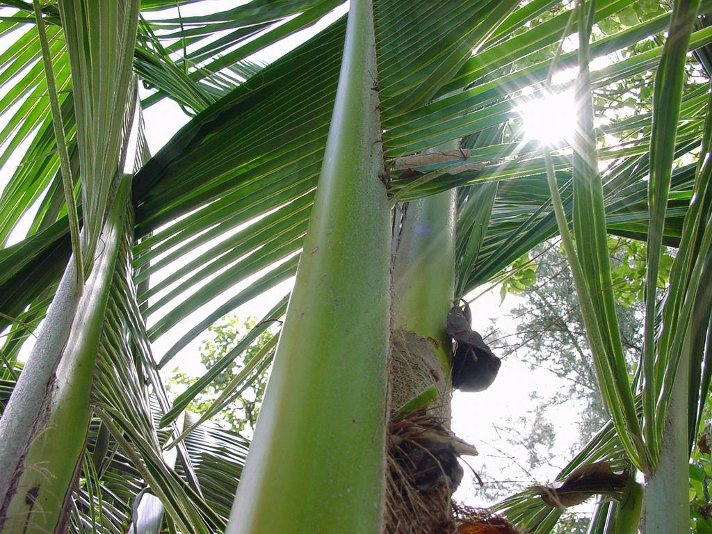 Palm leaves by voxen
