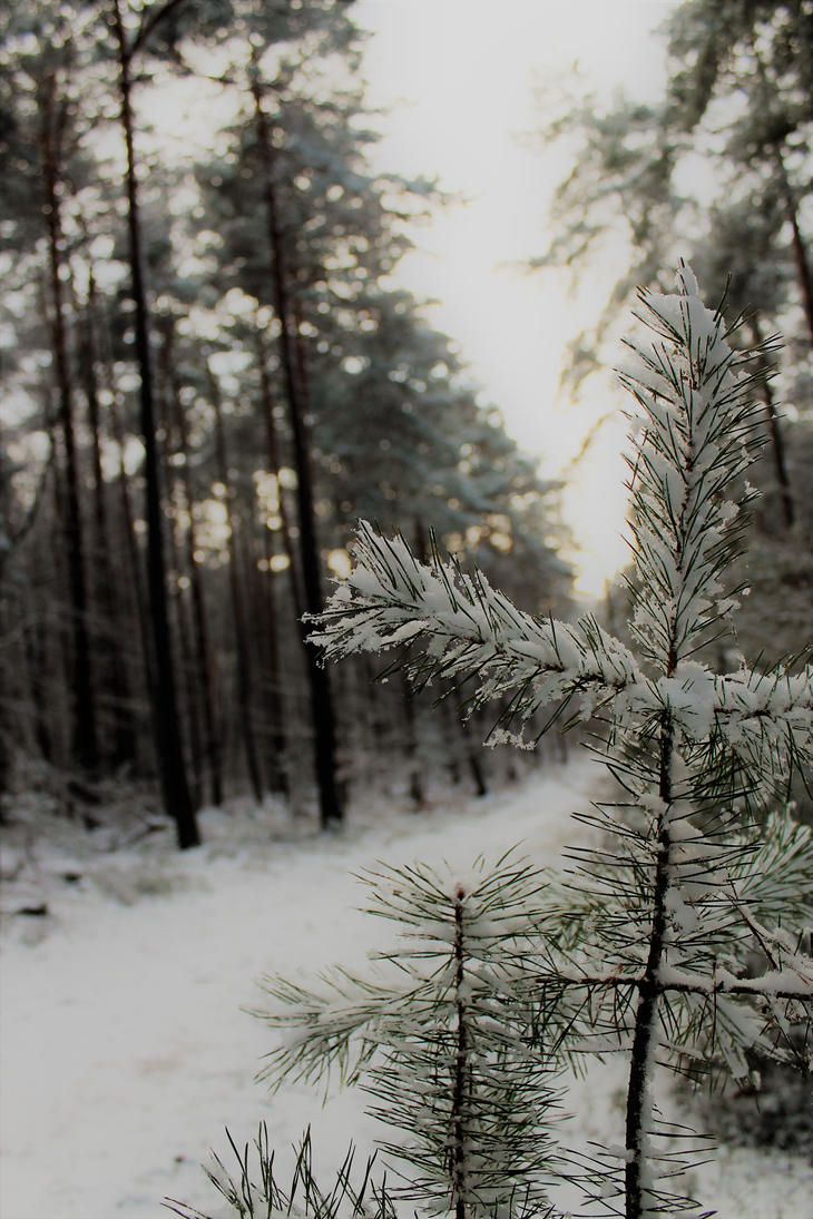 First snow by desireoffreedom