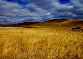 Landscape by ocsana