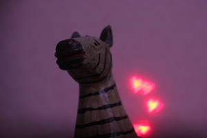 Valentine's zebra 2 by photodeus
