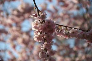 Spring pt 1 by photodeus