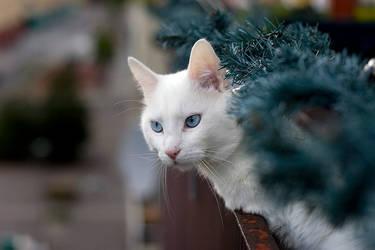 Cat peeking by photodeus