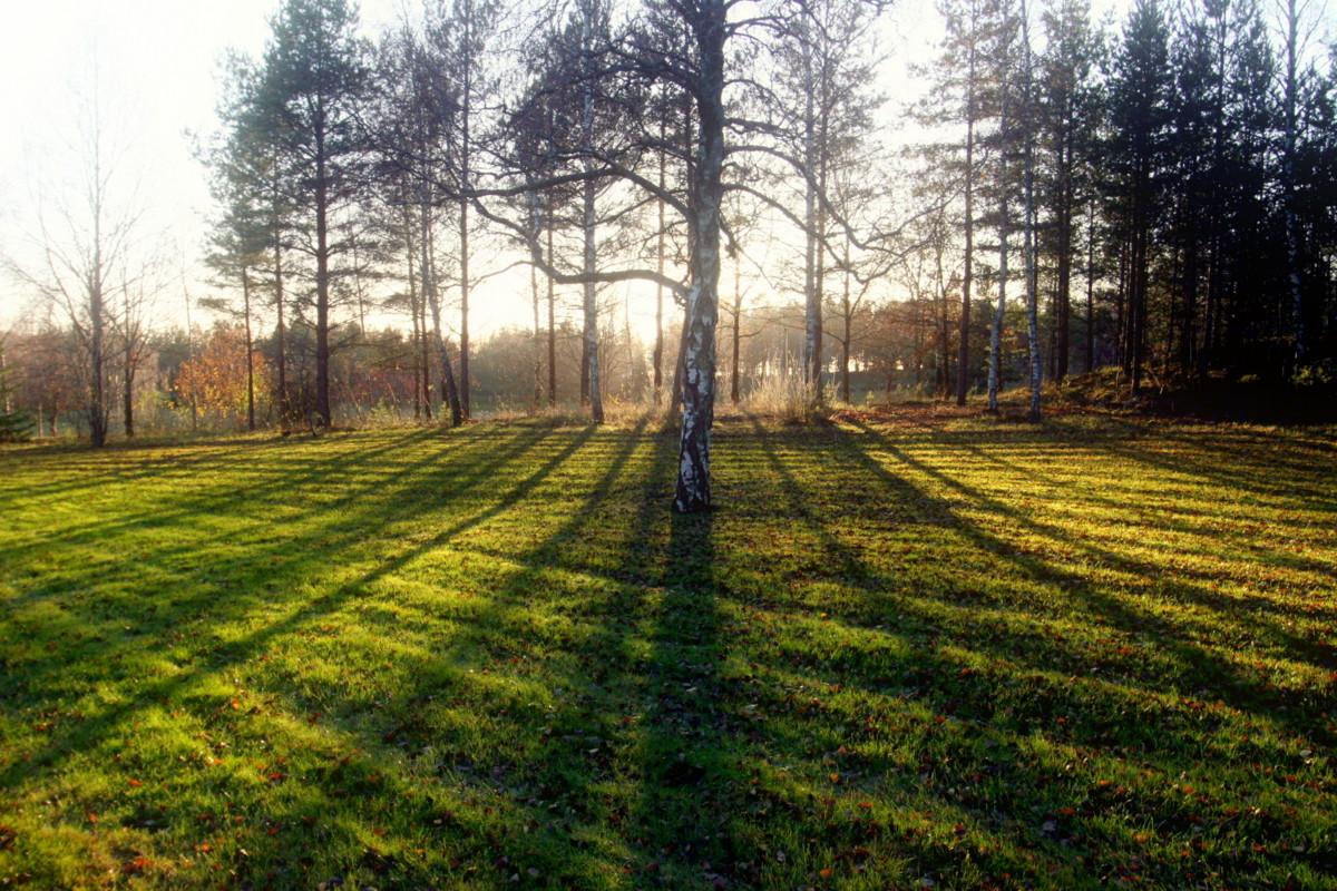 Cliche nature photo by photodeus
