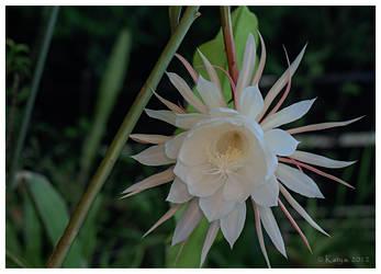 Night Flower by Belldandy1