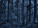 Cerulean Woods
