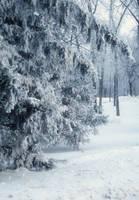 Snow Laden by midnightstouchSTOCK