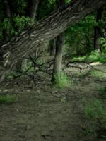 The Dark Woods by midnightstouchSTOCK