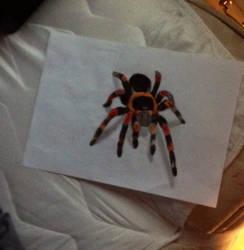 Tarantula drawing by slashclaws1
