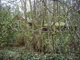 Overgrown Shack by billmbabblefotostok