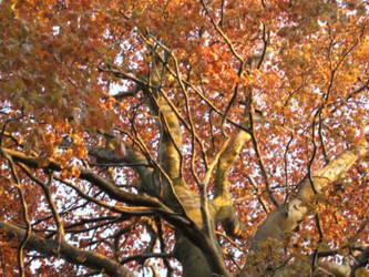 Auburnt Tree Wallpaper by billmbabblefotostok