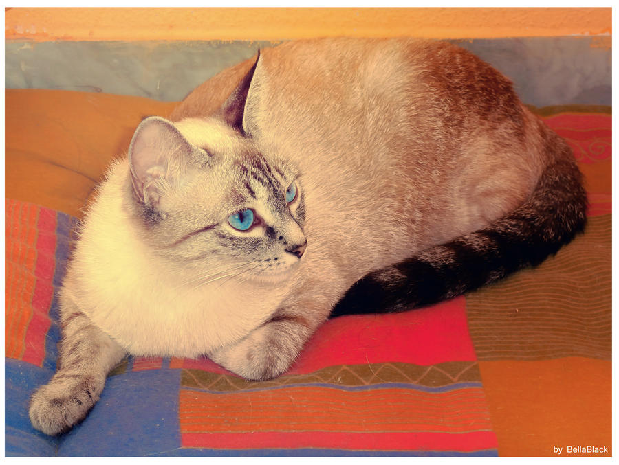 Galeria de fotos de Ms.Robinson/Pond/Cooper/Idris Tardis_the_cat_01_by_bellablackphotos-d5o3spb